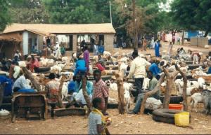 1014050-market_in_abuko-the_gambia